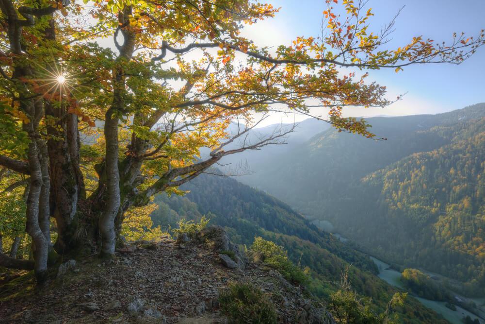 bosque-de-selva-negra-alemania